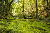 Brudour stream, Font d'Urle, Vercors Massif, Bouvante, Drôme, France