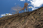 Naiouli savanna and soil erosion after fire, Gohapin Tribe, Northern Province, New Caledonia.