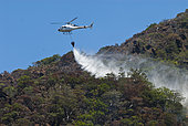 Helicopter fighting a Comboui forest fire in Thio threatening a population of Comboui fir (Callitris sulcata) Protected endemic species, New Caledonia