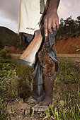 Hunter holding a Insular flying fox (Pteropus tonganus) killed with a shotgun. Endemic species. New Caledonia.