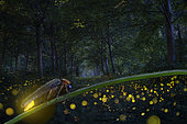 Firefly group in forest, Po River, Italy