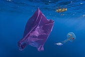 Plastic bag and a Mauve Stinger (Pelagia noctiluca), with a young drift fish. Contrast between a piece of hazardous waste and healthy nature. Concept image. Azores - Composite image. Composite image