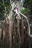Child climbing the roots of a banyan tree (Ficus sp). New Caledonia.