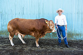 Breeder and his young Limousin breed bull during a bovine competition. Bourail agricultural fair. New Caledonia