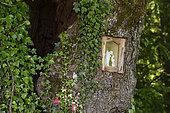 Le Chêne Béni, chêne (Quercus robur) avec statue de la Vierge dans son tronc, forêt, Magny-lès-Jussey, Haute-Saône, France