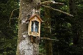 Chapelotte the Virgin of Sondaine, forest, Celles-sur-Plaine, Vosges, France