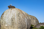 Granitic formations and nests of white storks (Ciconia ciconia), natural monument of Los Barruecos, Extremadura, Spain