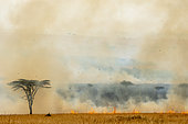 Bush fire, Masai-Mara Reserve, Kenya
