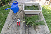 Horsetail manure step by step making in a garden