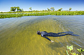 Snorkeling the secondary rivers in search of wildlife, Paraguay River, Pantanal, Brazil