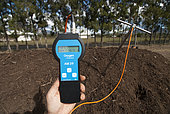 Measuring the temperature of a compost pile, New Caledonia.