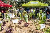 Agricultural Fair of Bourail. New Caledonia.