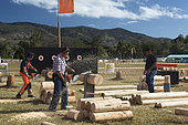Contest of cutting speed of wood with a chainsaw, Agricultural Fair of Bourail. New Caledonia.
