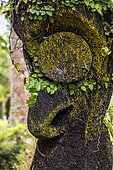 Carved trunk of tree fern, Ile d'Efate. Vanuatu