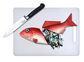 Plastic fish food. Concept image of a fish cut in half with a knife and spilling microplastics from within. The image is intended to illustrate the problem of pollution of the oceans by plastic garbage. We are eating plastic on our seafood. Contaminated fish and shellfish have been found everywhere from Europe, Canada and Brazil to China – and plastic-eating fish are now showing up in supermarkets. While most plastic has been found in the guts of fish, and would therefore be removed before eating, some studies have warned that microplastics, particularly at the nanoscale, could transfer from the guts to the meat (and, of course, we eat some species of small fish and shellfish whole). There is growing concern about toxins leaching – laboratory tests have shown that chemicals associated with microplastics can concentrate in the tissues of marine animals. Some commercially important species have seen the majority of their population affected. It confirmed that contamination has been recorded in tens of thousands of organisms and more than 100 species. Last year, the European Food Safety Authority called for urgent research, citing increasing concern for human health and food safety given the potential for microplastic pollution in edible tissues of commercial fish. Portugal