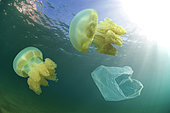 Jellyfishes and plastic bag driffting. For us, humans, a submerged plastic bag hardly resembles a jellyfish but for a sea turtle, a ocean sunfish or a dolphin the difference will not seem so obvious. So they frequently ingest drifting plastic bags or other plastic garbage they find in the ocean. Unlike their natural food plastic is not digestible and causes them obstructions of the digestive tract and a long death with great suffering. Portugal