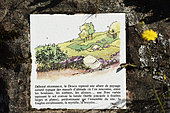 Rock with information panel on the landscape and the flora, mountain ash, top of Donon, Hautes Vosges, Bas Rhin, France