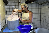 The curd is drawn to the canvas to be molded, cheese making, tomme de montagne or Bargkas, farm inn Entzenbach, Niederbruck, Haut Rhin, France
