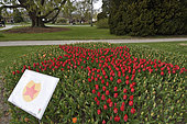 Tulip Festival every year in spring, Independence Park, Morges, canton of Vaud, Switzerland