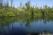 Parc de l Isle, Reserve naturelle nationale des Marais de l Isle, Saint Quentin, Aisnes, France