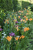Lilies in bloom in a garden, summer, Moselle, France