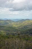 Grandes Fougères Park, Farino, New Caledonia