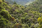 Wet forest landscape in Blue River Park. New Caledonia.