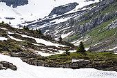 Desert de Platé, Nature Reserve Sixt-Fer à Cheval, Alps, France