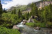 Torrent de Sales, Nature Reserve Sixt-Fer à Cheval, Alps, France