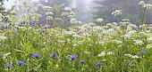 Peaty bog in spring, Samoëns, Alps, France