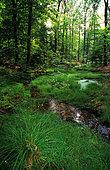 Langenberg forest, ONF reserve, Northern Vosges Regional Nature Park, Alsace, France