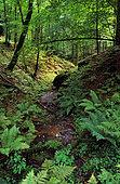 Stampfthal forest, ONF reserve, Northern Vosges Regional Nature Park, Alsace, France