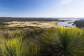 Southern grasstree (Xanthorrhoea australis), Narawntapu National Park, Tasmanie