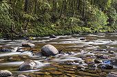 Franklin River, Franklin National Park - Gordon Wild Rivers, Tasmania