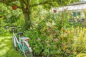 Spiraea japonica 'Anthony Waterer', Lysimachia punctata 'Alexander', Jardin Insolite, Parc Floral Vincennes, Paris, France