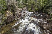Cuvier River, Cradle Mountain National Park - St Clair Lake, Tasmania, Australia