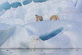 Ours polaire (Ursus maritimus) femelle et jeune sur un iceberg, Wahlenbergfjord, Nordaustlandet, Spitzberg, Svalbard.