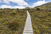 Boardwalk, Hartz Mountains National Park, Tasmania, Australia