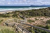 Site d'observation et de nidification du Manchot pygmée (Eudyptula minor) Bruny island, Tasmanie, Australie