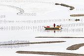 Fish catching, nets in open sea, Xiapu County, Fujiang Province, China
