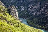 Gorges du Verdon, La-Palud-sur-Verdon, Réserve naturelle régionale de Saint Maurin, Parc naturel régional du Verdon, Alpes de Haute Provence, France