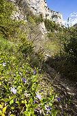 Falaise, Réserve naturelle régionale de Saint Maurin, La-Palud-sur-Verdon, parc naturel régional du Verdon, Alpes de Haute Provence,