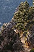 Route des gorges, La-Palud-sur-Verdon, Réserve naturelle régionale de Saint Maurin, Parc naturel régional du Verdon, Alpes de Haute Provence, France