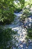 Dry river, Luberon Regional Nature Park, Alpes de Haute Provence, France