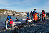 Hunting and community sharing of a Whale (Balaenoptera acutorostrata) by Inuit, Greenland