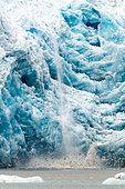 Velâge du glacier de l'Eternité et oiseaux de mer, Groenland