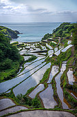Hamamoura 's rice field, Japan