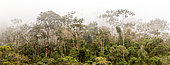 Tropical rainforest on the Amazonian side of the Peruvian Andes, Apaya (1920 m)