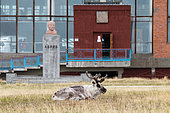 Svalbard reindeer (Rangifer tarandus platyrhynchus) in front of the bust of Lenin in the abandoned mining town of Pyramiden, Spitsbergen