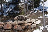 Brown bear (Ursus arctos) end of winter, Pyrenees, Spain